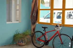 Blue Magic Hostel Bike